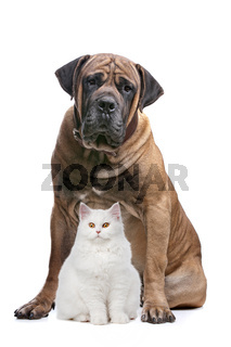 strong dog and a show cat