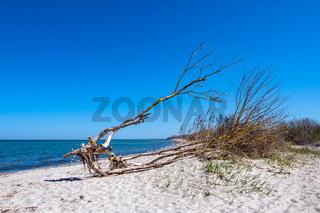 Baumstamm an der Küste der Ostsee auf der Insel Poel