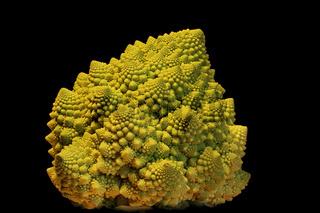 Romanesco (Brassica oleracea var. Botrytis)
