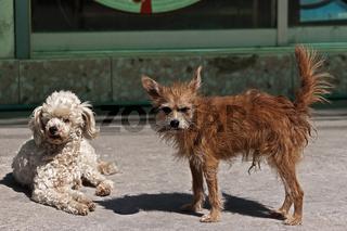 Straßenhunde Thailand