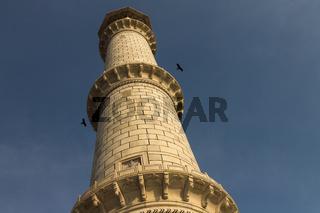 The Taj Mahal's minaret with two birds
