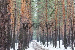 Early spring forest