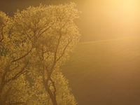 Landscape in Moravia in Central Europe with alders in backlight