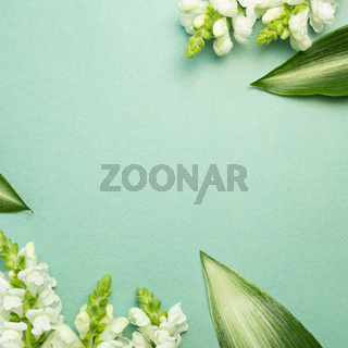 White snapdragon flowers on green background. flat lay, top view, copy space