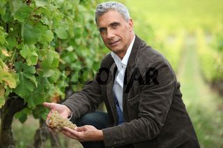 Vineyard owner inspecting a bunch of grapes