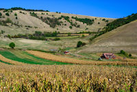 corn field farm romania