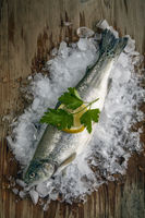 a freshly gutted trout with ice on a wooden surface