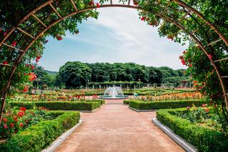 Rose garden at Incheon Grand Park in Korea