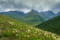 Mountain landscape with blooming meadows