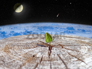 sprout breaking out of a tree against backdrop of space. Global climate change