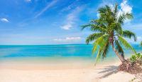 beach and coconut palm tree