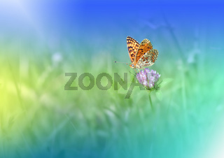 Beautiful Green Nature Background with Butterfly.