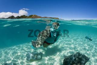 Lila Peitschenschwanz, Franzoesisch Polynesien