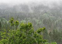 Foggy summer morning in the mountain, Sumava, Czech Republic