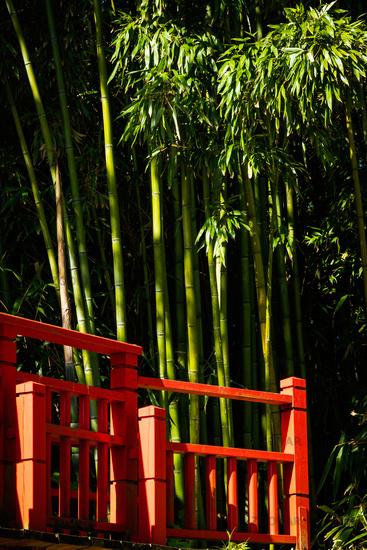 Red bridge and bamboo
