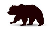 Wildlife bear