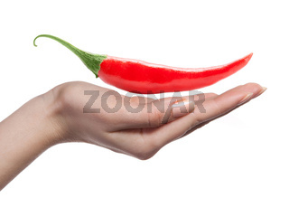chili pepper and human hand isolated on white