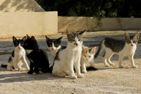 Cat family in search of food