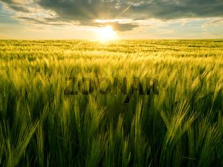 Field and sun.