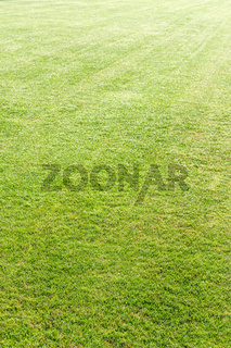 Green grass backgrounds
