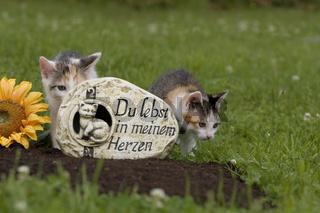 Tierfriedhof, Katze an Grab, animal cemetery, cat on grave