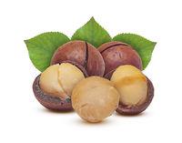 Macadamia grains and nuts