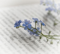 forget-me-not on a book