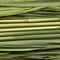 Common reed texture