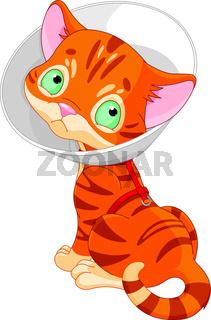 Sick Cute Kitten