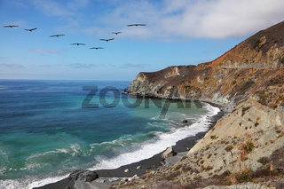 The pelicans over azure water