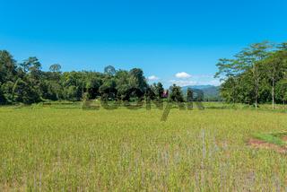 Landschaft mit Reisfeld in Tana Toraja auf Sulawesi