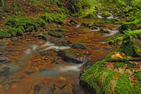 The Lierbach in the Northern Black Forest