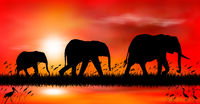 Elephants at sunset by the lake