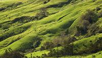 Central California Pasture in Spring