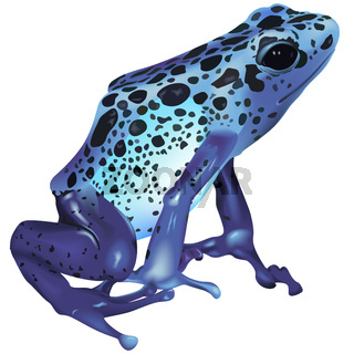 Poison Frog