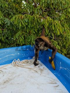 Affe, Isletas de Granada, Nicaragua