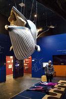 Whale exhibition in the Wattforum Multimar, Toenning, Schleswig-Holstein, Germany, Europe