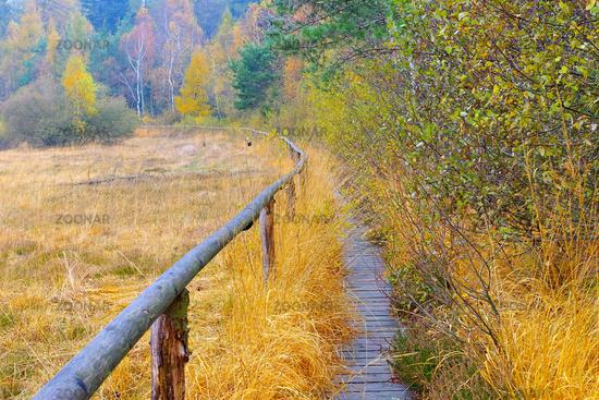 Bohlenweg im Lauschehochmoor im Zittauer Gebirge - track in the in the bog in Zittau Mountainsn, autumn