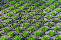 210610-226 Rasengittersteine Gras Rasen.jpg