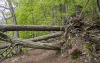The forest path is blocked. . .