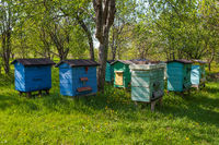 Colorful wooden beehives and bees in apiary