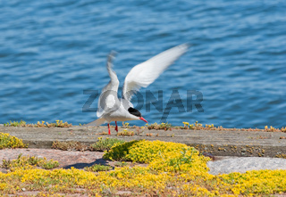 Seagull lands
