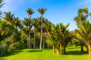 Adorable green grass lawn in palm grove