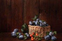 plum in a basket and a sprig of wild rose on a dark wooden background in a rustic style