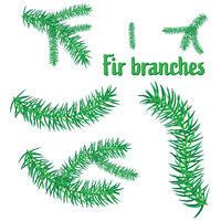 19102021-FirBranches.eps