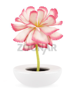 pink flower in pot isolated on white background