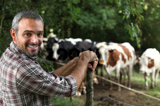Man in front of cows