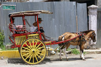 Cart and horse