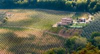 Rows of pruned bare grape vines in early autumn with cottage house. Tuscany Italy