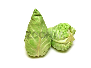 Spitzkohl / pointed cabbage (Brassica oleracea)
